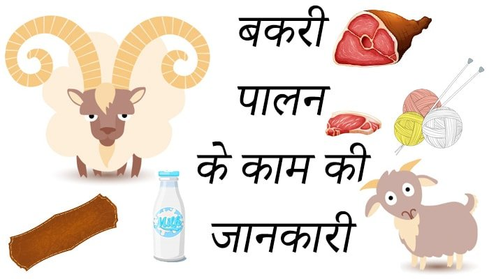 Goat Farm information in Hindi